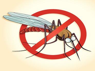 Komarnici kao najbolja zaštita od insekata